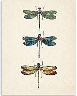 Dragonflies Artwork - 11x14 Unframed Art Print - Great Gift